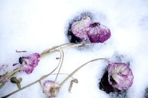 Nerits bloemen
