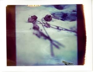 Nerits bloemen2