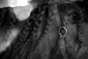 Paard Frankrijk