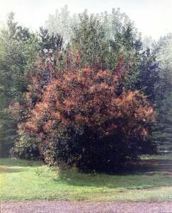 Frankrijk boom