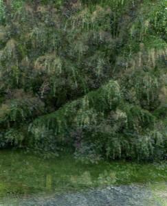Frankrijk groene struik