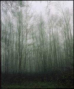 Birgit Matschullat - 1.10 - feb 2016 - Forest I 60x50