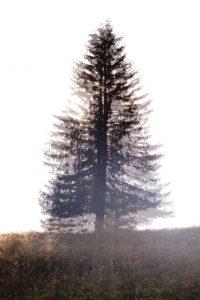 Birgit Matschullat - 3.13 - feb 2016 - Skinny Tree 60x40