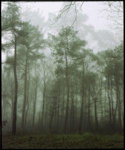 Birgit Matschullat - 9.10 - feb 2016 - Forest III 60x50